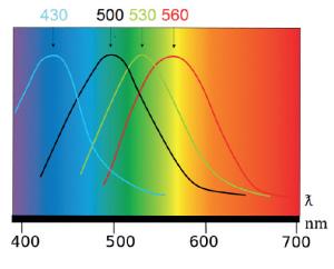 Funktionalität des Zell-Check Spektrometers